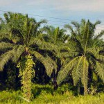 Mission to extract biodiesel from palm oil waste in Malaysia