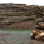 Hundreds of jobs in danger despite timber mill purchase