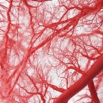 Innovative partnership leads to blood vessel manufacture