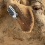 Low energy electronics produces solution for cattle tag