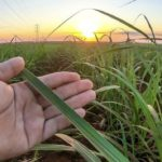 Sugarcane and cotton waste turned into fuels, plastics, feed