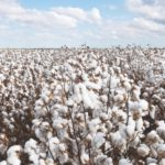 Cottoned on: Why Gates Power Transmission Solutions are ideal for the cotton industry