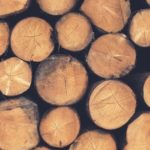 Plan for industry to transition as old growth logging in Vic ends