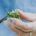Medicinal cannabis manufacturing gains traction