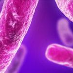 Metals could be link to new antibiotics