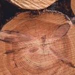 ForestrySA timber supports South Australian sawmill supply chains
