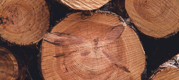 ForestrySA