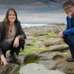 University of Wollongong to commercialise seaweed clinical products
